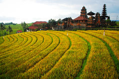 Bali Indonesia. Green rice fields on Bali island Stock Photo