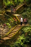Stairs in the nature. Bali, Indonesia - July 06, 2017. Stairs and roots and some tourists in the scene the Nature of Goa Gajah Temple Bali Indonesia stock images