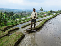 Bali, Indonesia - July 12, 2014: An unidentified adult farmer wo. Bali, Indonesia - July 12, 2014: An unidentified adult farmer on white long sleeve shirt Royalty Free Stock Photo