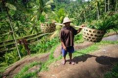 BALI, INDONESIA - LUGLIO 2014: Canestri della tenuta dell'agricoltore Giacimenti del riso del terrazzo su Bali, Indonesia Immagini Stock
