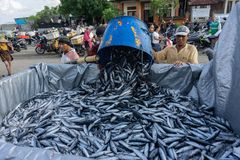 BALI/INDONESIA- 15 MAGGIO 2019: I pescatori muovono il loro fermo verso un pesce che trasporta l'automobile Ci sono lotti del pes fotografia stock