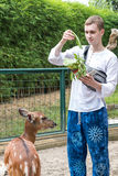 BALI, INDONESIA - March 22, 2017: Tourist man feeding young deers from hands and making shoots on his smartphone in Bali Stock Photos