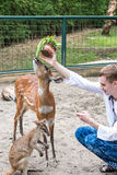 BALI, INDONESIA - March 22, 2017: Tourist man feeding young deers from hands and making shoots on his smartphone in Bali Stock Photography