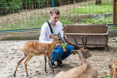 BALI, INDONESIA - March 22, 2017: Tourist man feeding young deers from hands and making shoots on his smartphone in Bali Stock Images