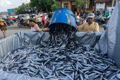BALI/INDONESIA-MAY 15 2019年:渔夫移动他们的抓住向运输汽车的鱼 有鱼捕获的许多  库存照片