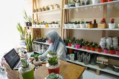 BALI/INDONESIA-MAY 25 2019: A Muslim businesswoman is selling succulent plants on internet. She has a clean and white workshop. stock images