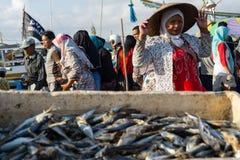 BALI/INDONESIA-MAY 15 2019: Niektóre świeża ryba łapałam rybakami umieszczają wśrodku basenu wtedy suszącego pod słońcem wtedy su zdjęcia stock