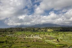 Bali, Indonesia. Ricefields, coconut trees and huts at background stock images