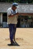 Bali/Indonesia - 9 settembre 2016: Semi di secchezza/grano del sole lavoratore/dell'agricoltore sulla condizione dura concreta co Immagini Stock Libere da Diritti