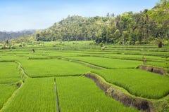 bali indonesia slags riceterrasser royaltyfri fotografi