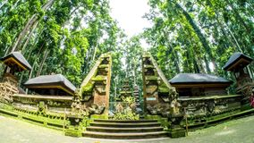 Bali Indonesia Temple Monkey Forrest Timelapse 4k. Timelapse of a typical Indonesian temple in the monkey forrest on Bali stock video