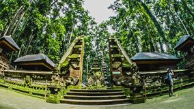 Bali Indonesia Temple Monkey Forrest Timelapse 4k. Timelapse of a typical Indonesian temple in the monkey forrest on Bali stock footage