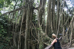 Bali Indonesia Ubud Monkey Forest Temple liana Royalty Free Stock Photos