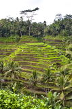Bali indonesian terrace Royalty Free Stock Images