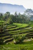 Bali, Indonesien. stockfotos
