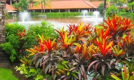 Bali Indonesien - December 29, 2008: Lagun och parkerar i den Ayodya semesterorten Royaltyfri Foto