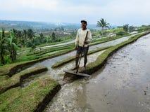 Bali Indonesien - Juli 12, 2014: En oidentifierad vuxen bonde wo Royaltyfri Foto