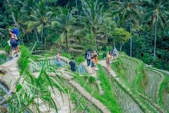 BALI INDONEZJA, KWIECIEŃ, - 05, 2017: Niezidentyfikowani ludzie cieszy się pięknego krajobraz z zielonymi ryż tarasują blisko Fotografia Stock