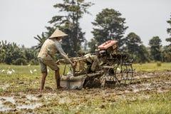 Bali, Indonezja/- 03 05 2018: mężczyzna orze pole z dużym blok Fotografia Stock