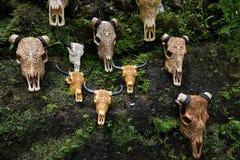 BALI INDONEZJA, STYCZEŃ, - 09, 2018: Kilka krów czaszki z rżnięty drawning Zdjęcia Stock
