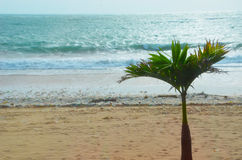 Bali Island. Filmed in Bali Island hotel Royalty Free Stock Photo