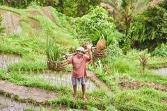 BALI ISLAND - INDONESIA  11.03.2019: Rice farmer waving his hand. Tegalalang Rice Terrace. stock photos