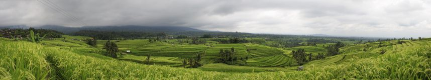 Bali - Jati Luwih Rice Terraces Royalty Free Stock Images