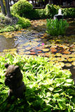 bali landscaping курорт Стоковая Фотография