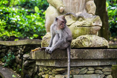 Bali. Mokey Forest. Monkey sitting on the statue Royalty Free Stock Photos