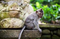 Bali. Mokey Forest. Monkey sitting on he statue Royalty Free Stock Photo