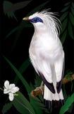 Bali Myna Leucopsar rothschildi. Rare endemic bird and faunal emblem of Bali. vector illustration vector illustration