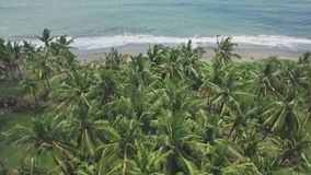 Bali Palm Trees Rise Aerial 4k. 4k aerial footage of palms and ocean in the back stock footage