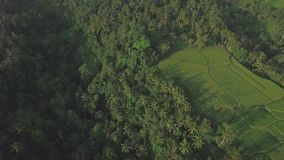 Bali Palms With Rice Fields Aerial 4k stock footage