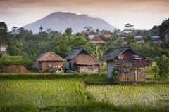 Bali-Reis-Felder. lizenzfreies stockbild