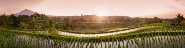 Bali-Reis-Felder stockbild