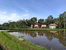 Bali-Reisfelder und Landhaushäuser Stockfotografie
