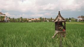 Bali rice field with an altar sanggah in front of it. Green flat rice field bordered by white houses with orange tile roofs and wooden altar sanggah with stock video footage