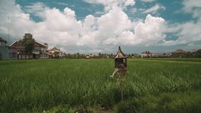 Bali rice field bordered by houses with an altar sanggah in front of it. Green flat rice field bordered by white houses with orange tile roofs and wooden altar stock footage