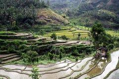 Bali rice field Stock Photo