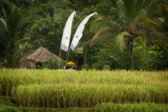 Bali Rice Field. Flags adorn a hut in a beautiful terraced rice field in the village of Sidemen in the eastern part of this idyllic island Royalty Free Stock Image