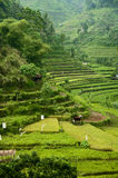 Bali Rice Fields. Eastern Bali is a location for some of the most beautiful and dramatic rice terraces in the world Royalty Free Stock Photos