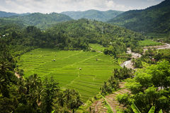 Bali Rice Fields. High up in the northwest corner of Bali, Indonesia some of the most beautiful rice terraces can be found. Many tourist never get to see places Stock Photography