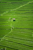Bali Rice Fields. High up in the northwest corner of Bali, Indonesia some of the most beautiful rice terraces can be found. Many tourist never get to see places Royalty Free Stock Images