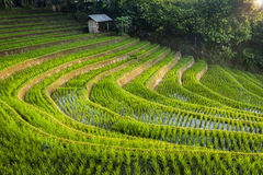 Bali Rice Fields. Bali is known for its beautiful and dramatic rice terraces. The graphic lines and verdant green fields are a vision to behold. Some of the Stock Photos