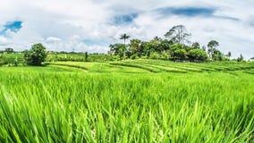 Bali Rice Fields Motionlapse 4k. Timelapse of some beautiful rice fields on Bali, Indonesia stock video