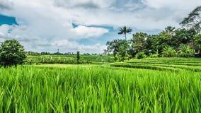 Bali Rice Fields Motionlapse 4k. Timelapse of some beautiful rice fields on Bali, Indonesia stock footage