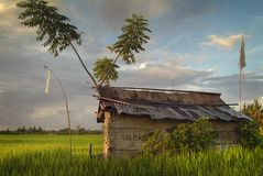 Bali Rice Fields at Sunrise. The rice fields near the village of Ubud are some of the most beautiful in all of Bali. Small huts provide shelter from the blazing Stock Photography
