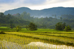 Bali Rice Fields. The rice terraces of Sidemen, Bali, in the eastern part of the island are some of the most beautiful in all of Indonesia Stock Photo