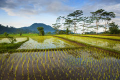 Bali Rice Fields. The rice terraces of Sidemen, Bali, in the eastern part of the island are some of the most beautiful in all of Indonesia Stock Photography