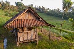Bali Rice Fields Royalty Free Stock Photography